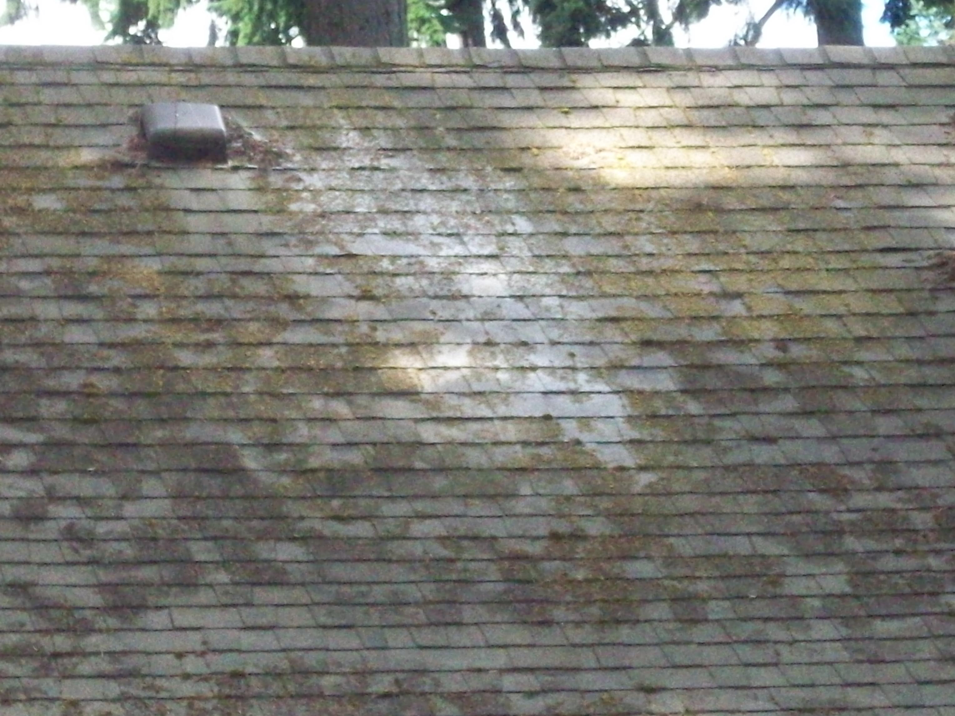 Roof Moss Control Failure Roof Life Of Oregon